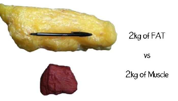 Grasso e muscolo