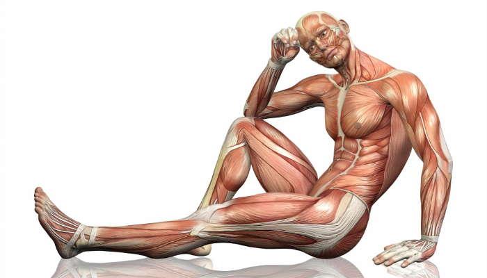 Proteine Massa Muscolare